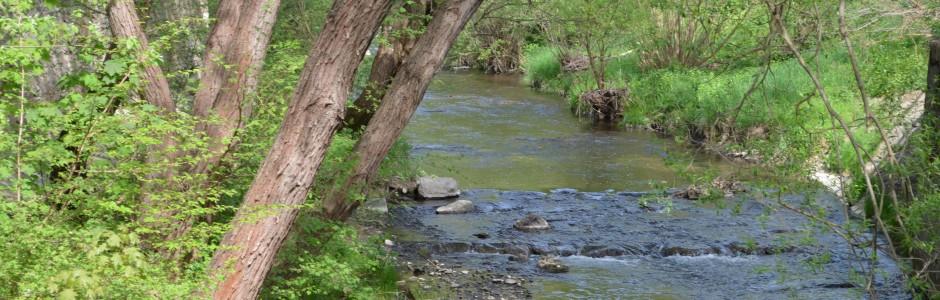 Fluss mit Bäumen